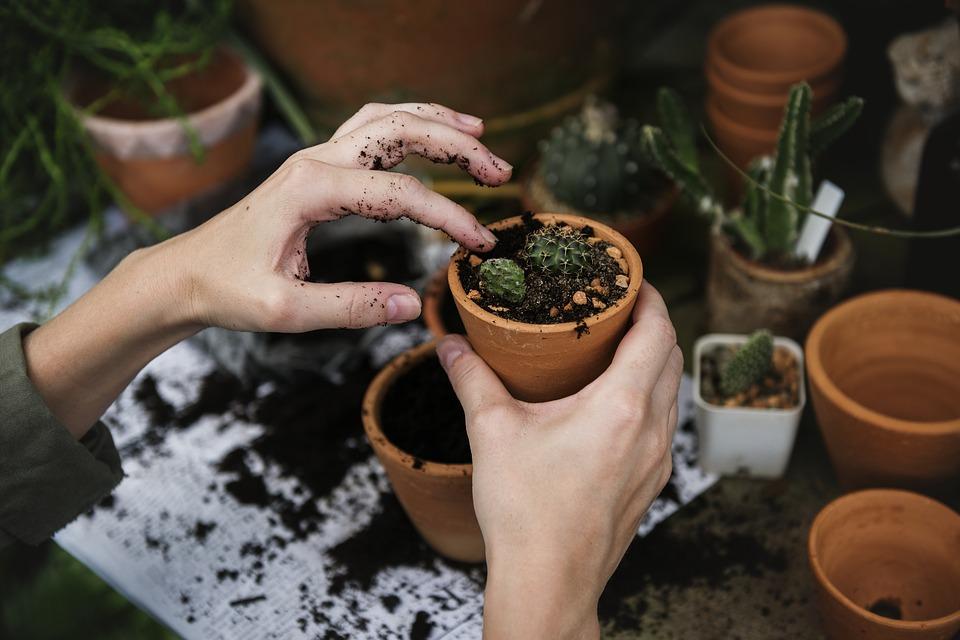 Quelle période pour planter des tomates dans son jardin ?