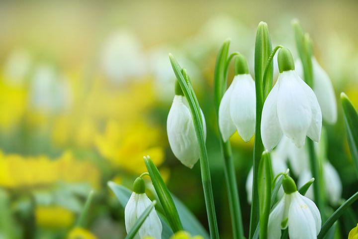 Jardinage, quelles fleurs pour quelle saison ?